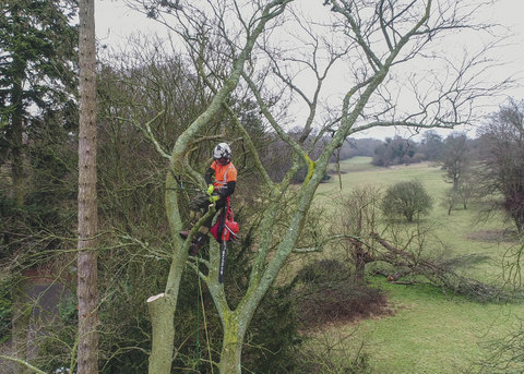 Tree Surgery Drone Photography